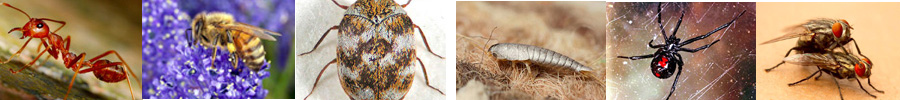 Residential Pests Collage 1